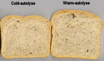 Warm versus Cold Autolyse